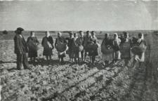 Sadzenie ziemniaków na polu w Konstantynowie [fotografia]