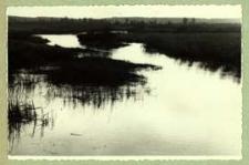 Krzna powyżej mostu drogowego Biała Podlaska - Brześć [dokument ikonograficzny]